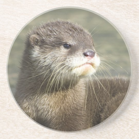 Coaster - Cute Baby Otter