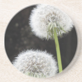 Coaster - Dandelions