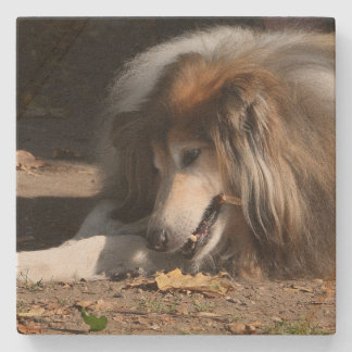 Coaster, Stone, Image, Dog, Collie Stone Coaster