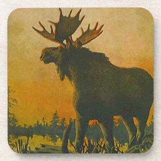 Coaster Wildlife Moose Sunset Swamp Donkey Marsh