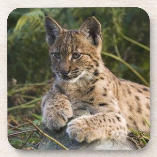 coasters - lynx