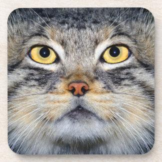 coasters - pallas cat