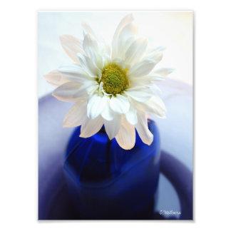 Cobalt Daisy Photographic Print