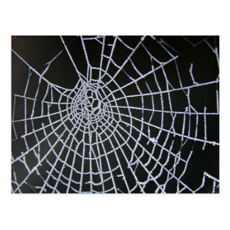 Cobweb Postcard