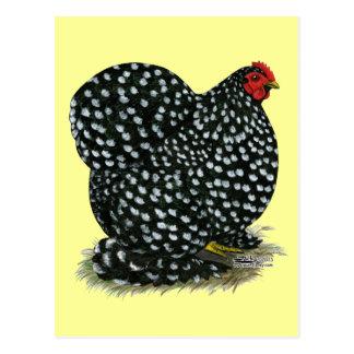 Cochin Mottled Hen Postcard