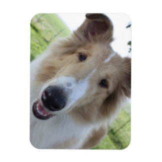 Cock-eyed Collie Magnet