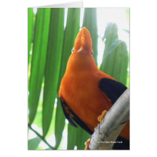 Cock-of-the-Rock Greeting Card
