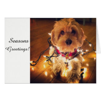 Cockapoo Puppy Christmas Card