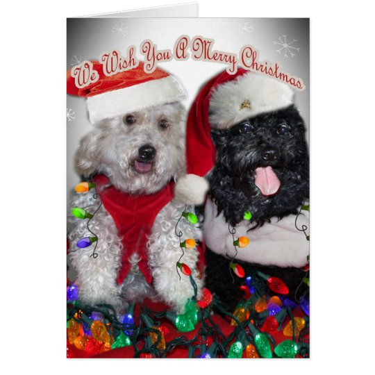 Cockapoo We Wish You Merry Christmas Card