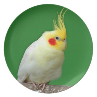 Cockatiel bird beautiful  photo dish, plate