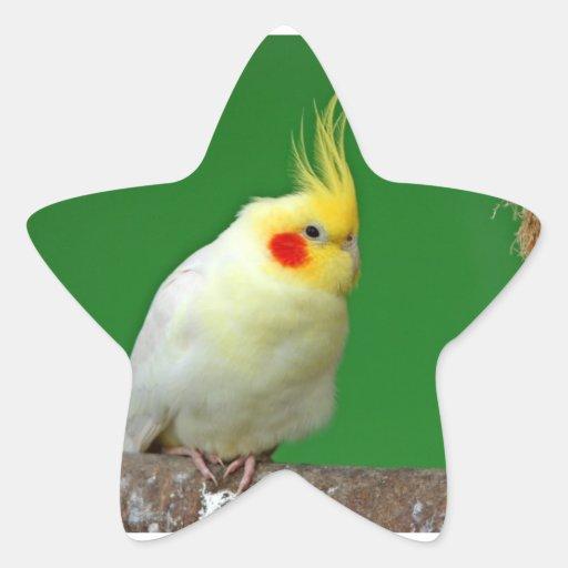 Cockatiel bird beautiful photo sticker, stickers