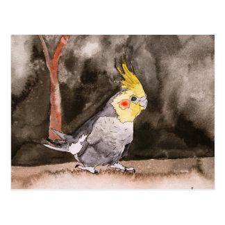 cockatiel bird painting postcard