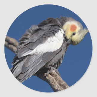 Cockatiel Classic Round Sticker