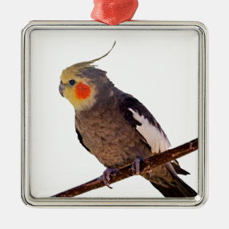 Cockatiel Gray and Yellow Pet Bird Photograph Christmas Ornament