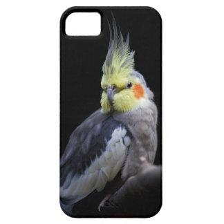 Cockatiel iPhone 5 Case-Mate Case iPhone 5 Case