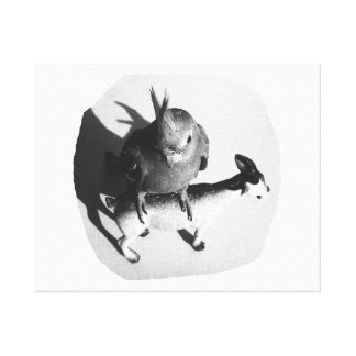Cockatiel on rubber goat black and white picture canvas print