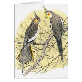 Cockatiel Pair - Nymphicus hollandicus Card