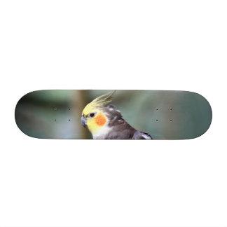 Cockatiel Custom Skate Board