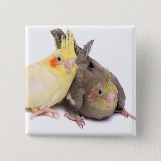 Cockatiels 15 Cm Square Badge