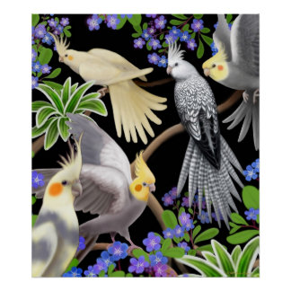Cockatiels and Forget Me Nots Poster