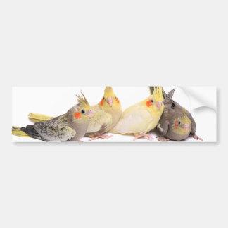 Cockatiels Bumper Sticker