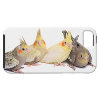 Cockatiels Case For The iPhone 5