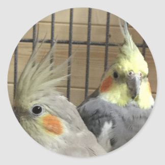 Cockatiels Classic Round Sticker