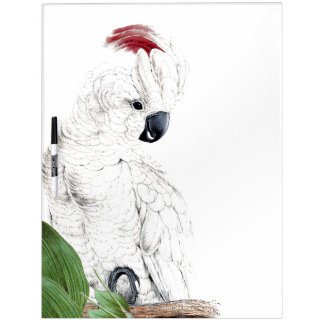 Cockatoo Parrot Bird Wildlife Dry Erase Board