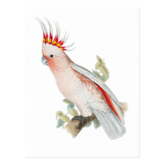 Cockatoo Vintage Postcard