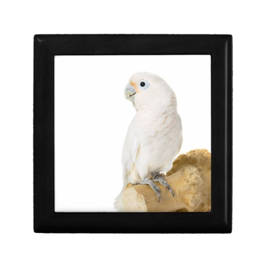Cockatoo white parrot bird beautiful photo, gift gift