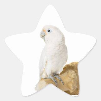 Cockatoo white parrot bird beautiful photo, gift star sticker