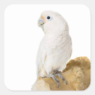 Cockatoo white parrot bird beautiful photo, gift square sticker