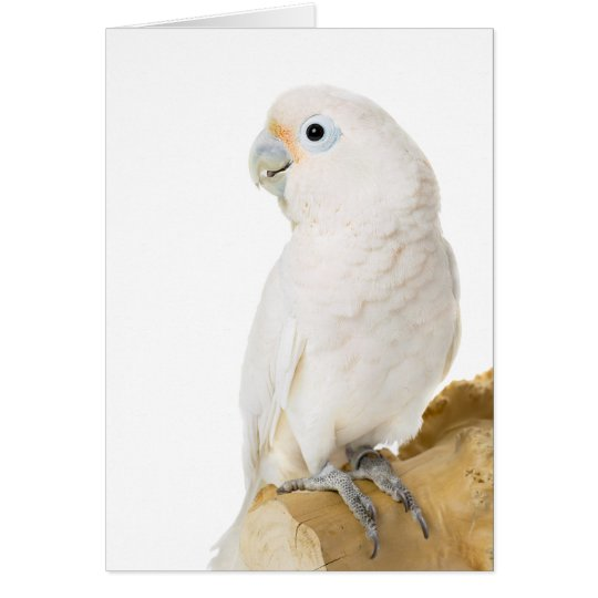 Cockatoo white parrot bird cute blank note card