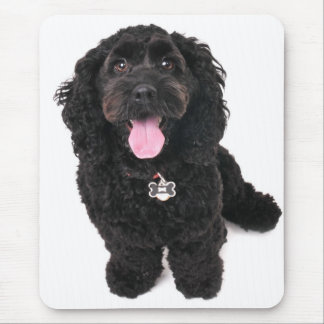 cocker poodle mix puppy  looking up mouse mat