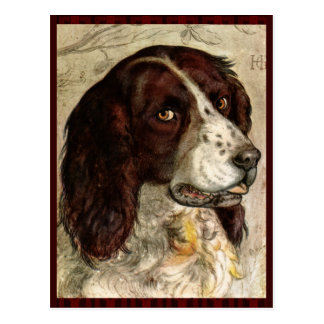 Cocker Spanial Dog Print Post Cards