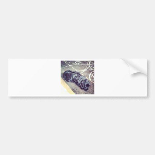 Cocker Spaniel Bumper Stickers
