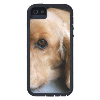 Cocker Spaniel iPhone 5 Cover
