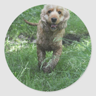 cocker spaniel classic round sticker