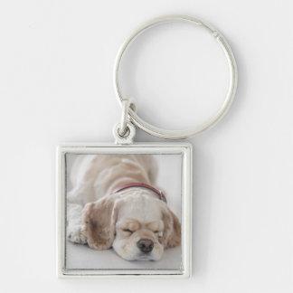 Cocker spaniel dog sleeping key ring