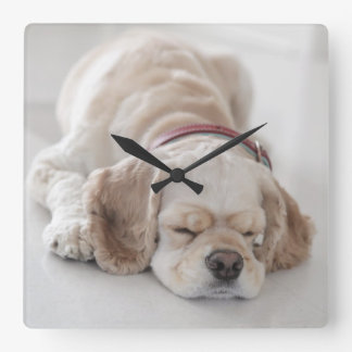 Cocker spaniel dog sleeping square wall clock