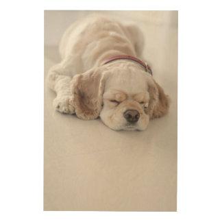 Cocker spaniel dog sleeping wood wall art