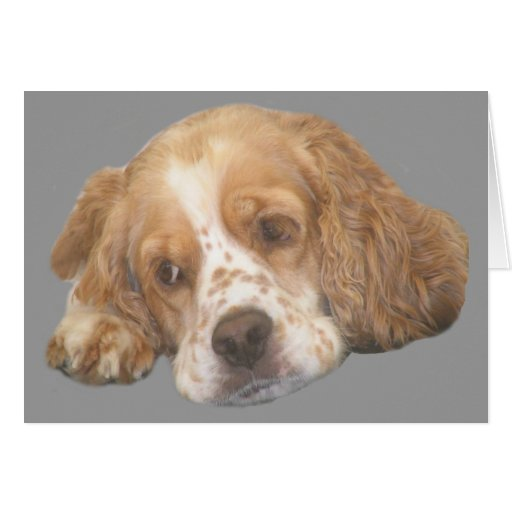 Cocker Spaniel Freckles Greeting Card