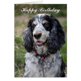 Cocker Spaniel happy birthday greeting card