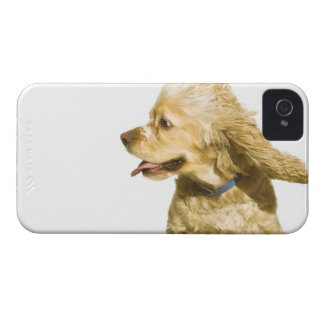 Cocker Spaniel iPhone 4 Case-Mate Case