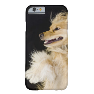 cocker spaniel mix on its back barely there iPhone 6 case