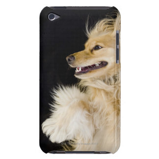 cocker spaniel mix on its back barely there iPod covers