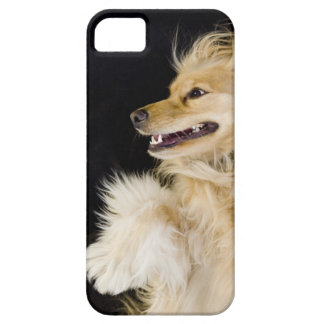 cocker spaniel mix on its back iPhone 5 case