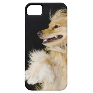 cocker spaniel mix on its back iPhone 5 covers