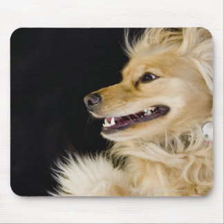 cocker spaniel mix on its back mouse mat