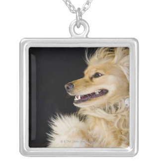 cocker spaniel mix on its back silver plated necklace